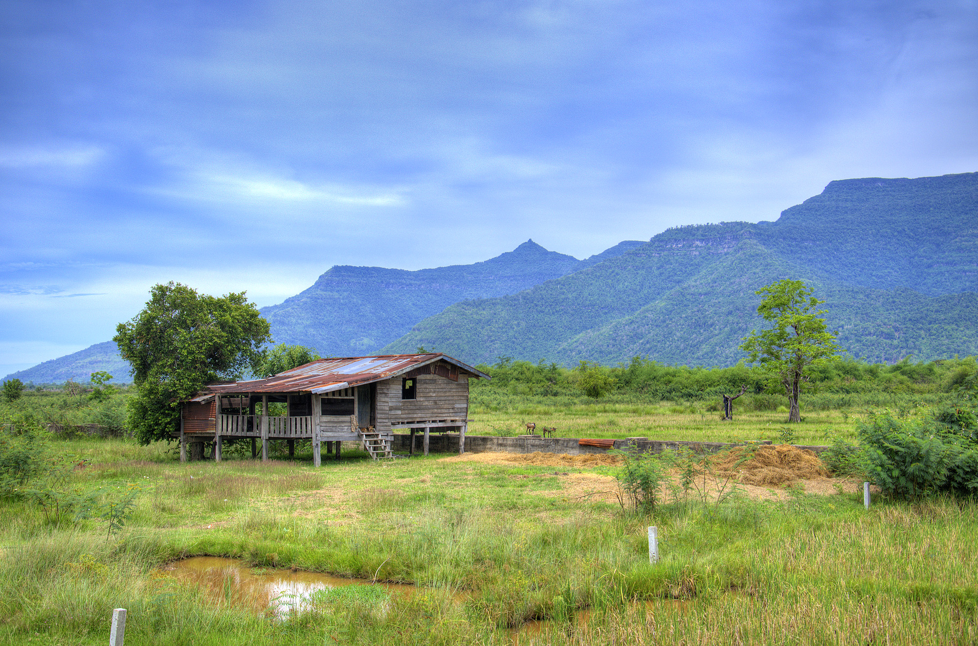 house, rice paddy, and mountains